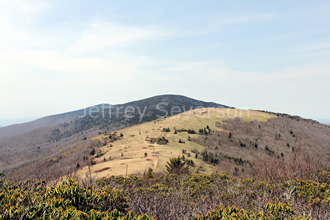 Round Bald of Roan Mountain, TN