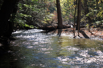 Black Creek in Fall